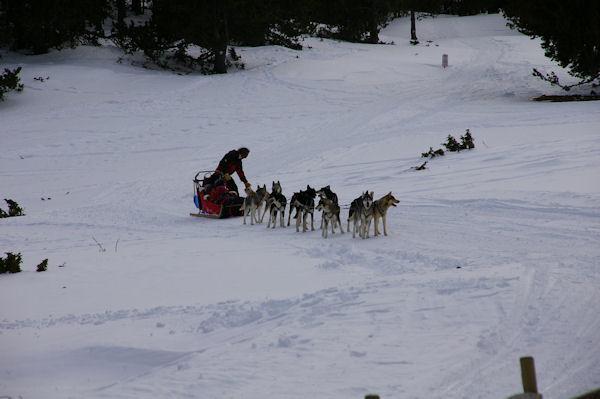 Les chiens de traineau sous la Barraca dels Claus
