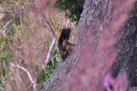 Un ecureuil