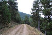 La piste forestiere au Sarrat de Font Freda