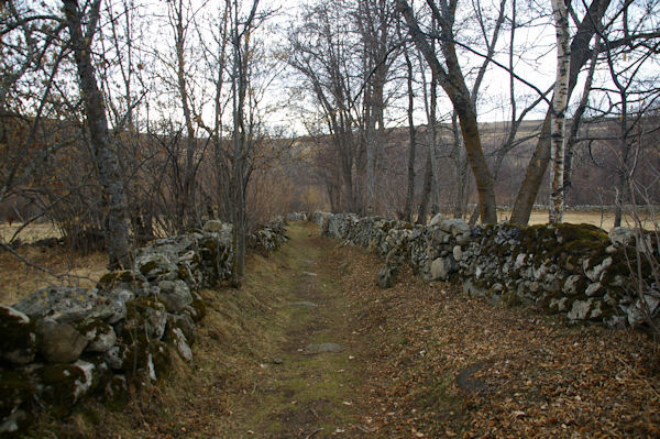 Le joli chemin menant au dolmen de Brangoli