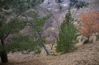 Le vallon du ruisseau de Brangoli