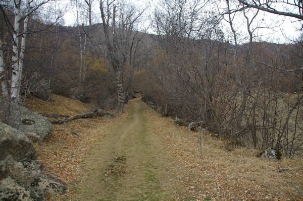 Le chemin au dessus de Brangoli qui mène au Coll de Juell