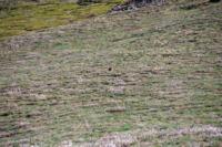 Deux mouflons dans la Coma d en Garcia