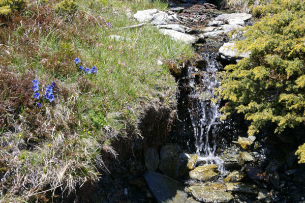 Un joli ruisseau fleuri au dessus de la vallée de Cortal Rosso