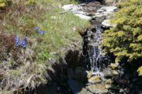 Un joli ruisseau fleuri au dessus de la vallee de Cortal Rosso