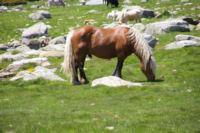 Belle bete au Col de Puymorens