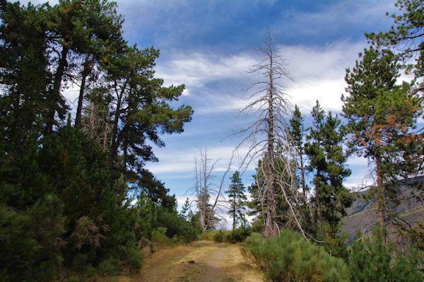 Le chemin sous la Jaceta