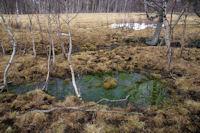 Un peu de couleur au milieu des herbes seches de l'hivers