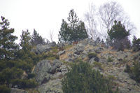 Cavalcade de moufflons au dessus du Lac d&#39el Passet