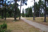 Le chemin forestier au dessus du refuge des Fornells