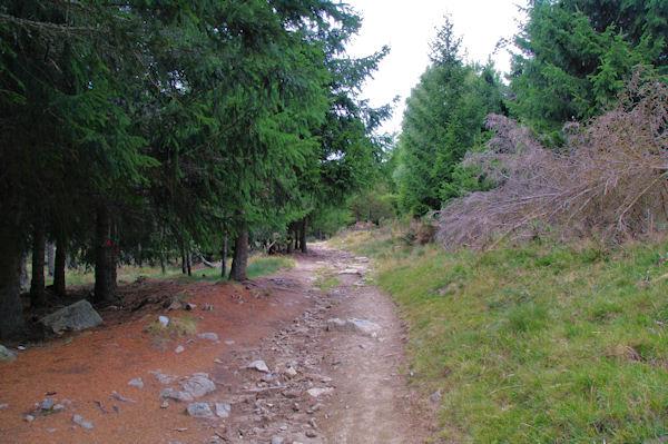 Le chemin menant au Coll del Pam