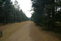 Le chemin forestier menant au Lac de Matemale