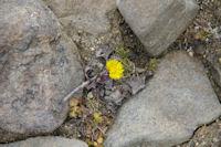 Une jolie petite fleur dans cette grisaille