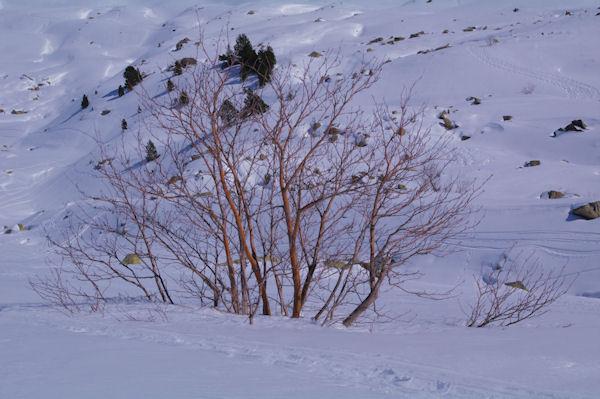 C_est l_hivers pour les feuillus!