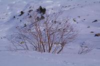 C'est l'hivers pour les feuillus!