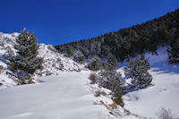 Le Bosc de Saquers