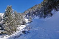 Le Bosc de Saquers, rive gauche du ruisseau de Ribals