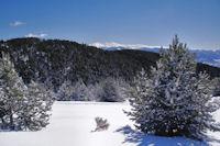 Le Bosc de Saquers, au fond, le Puigmal d-Err