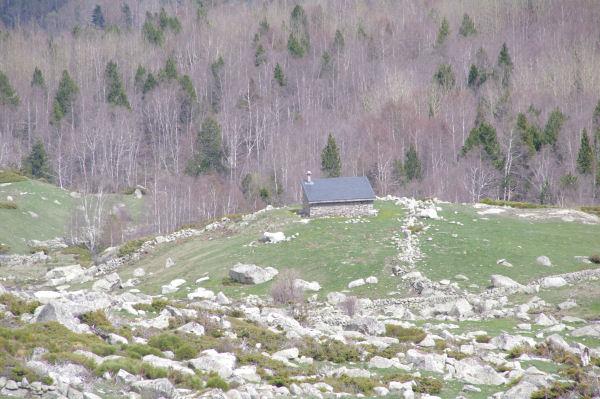 Une cabane dans la Coma de Campcardos