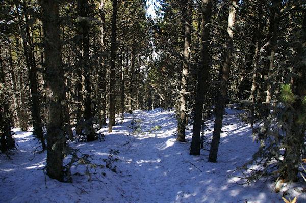 Lea descente vers la Carrerada depuis le Coll de Juvell
