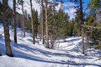 Le sentier dans la forêt de la Calma