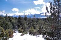 En remontant dans la foret de Bolquere au dessus de Pyrenees 2000