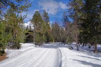 Sur la piste de ski de fond à Saleres d_en Guinot