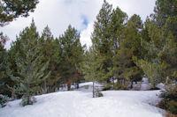 En remontant dans la forêt de Bolquère au dessus de Pyrénées 2000