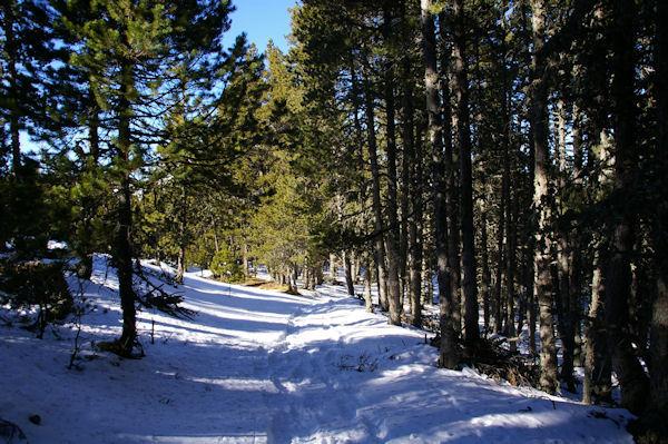Le chemin sous le refuge pastoral de Ste Léocadie