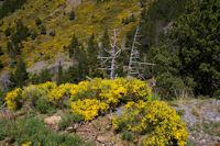 Nature morte au dessus de la Ribera d'Err