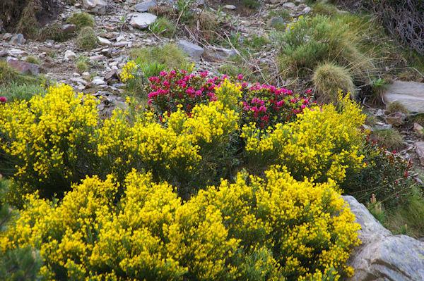 Festival couleur dans le vallon de la Ribera d_Err
