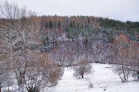 La forêt rive gauche du Riu d_Eina