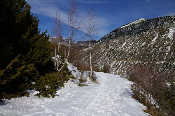 Le chemin enneigé remontant à La Socarrada, au fond, la Tossa de Nambet
