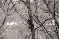 En descendant vers Angoustrine, un ecureuil!