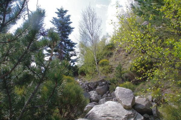 Les sentier pierreux à Serrat dels Camps