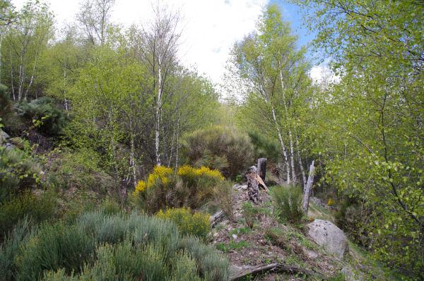 Les sentier peu marqué à Serrat dels Camps