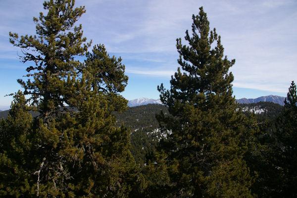 Au fond, le Canigou depuis la montée au Puig de la Tossa