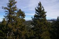 Au fond, le Canigou depuis la montee au Puig de la Tossa