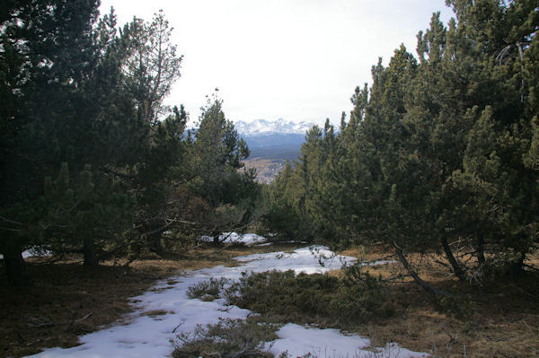 Traversée en forêt en descendant de Font del Llamp