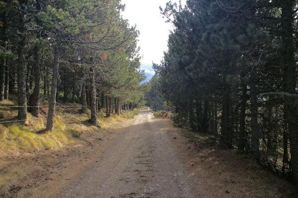 Le chemin pour rejoindre le vallon des Carbonères