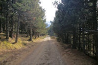 Le chemin pour rejoindre le vallon des Carboneres