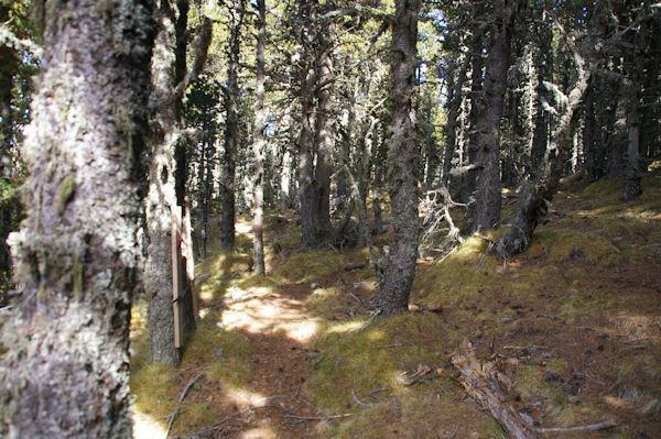 Traversée en forêt pour rejoindre Font del Llamp