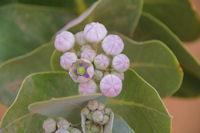 Un arbre en fleur dans l'Oued en Naam