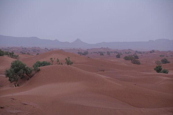 Les dunes d_Oulad Driss, au fond, le Djebel Bani