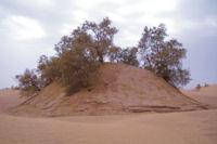 Un pog de tamaris