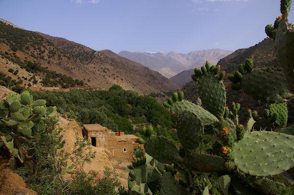 Des Cactus malheureusement fanés à Azersfane, au fond, l&#39Aguelzim