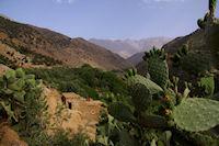 Des Cactus malheureusement fanes a Azersfane, au fond, l'Aguelzim