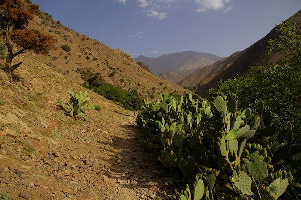 Des Cactus entre Azersfane et Ikoubline