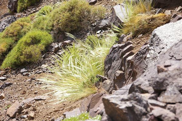 Herbes chatoyantes sur les pentes de la vallée d&#39Azaden