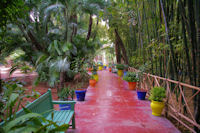 La jungle a Majorelle